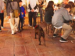 寧夏路夜市 犬