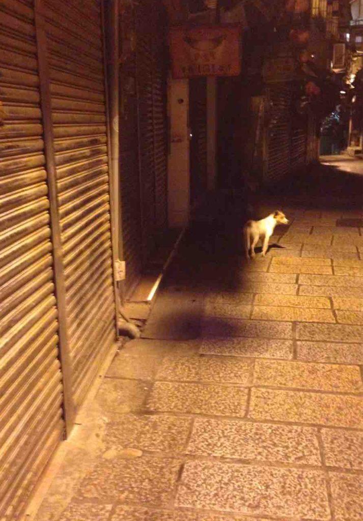 九份 夜景 犬